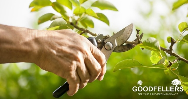 http://goodfellers.ie/tree-pruning/